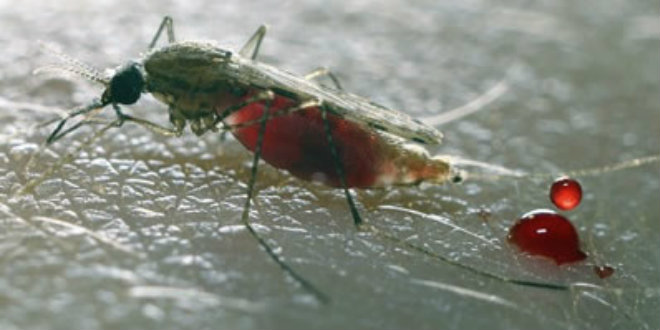 1 in 10 Malaria drugs in Nigeria are of poor quality