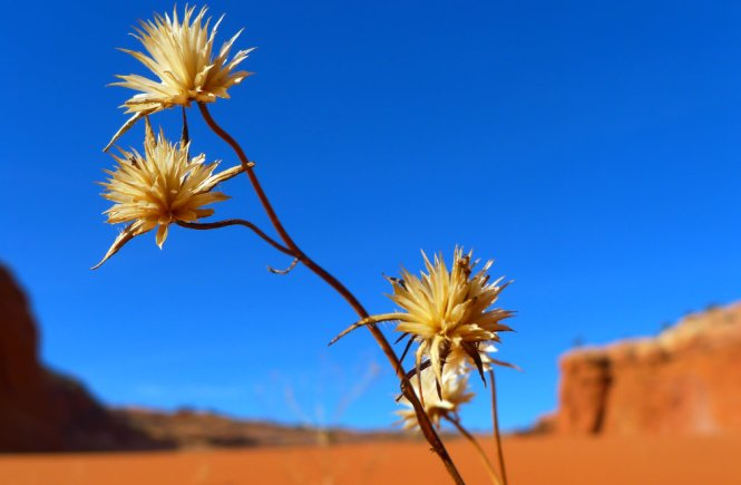 Little Desert Flower - elsieisy blog