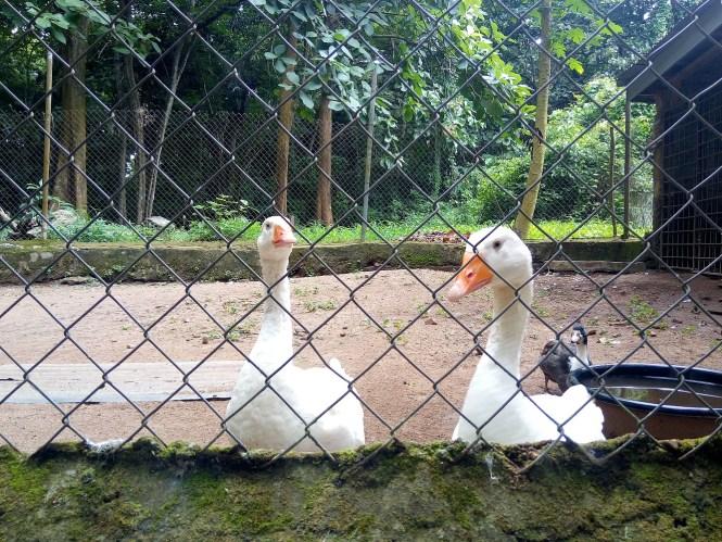 Duck - Agodi Gardens - Elsieisy blog - Travel blog