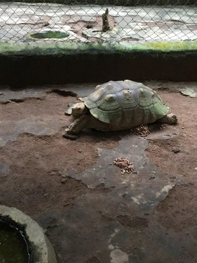 tortoise - agodi gardens - elsieisy blog