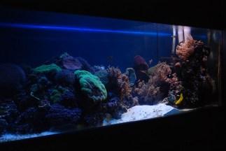 Novosibirsk zoopark dierentuin aquarium
