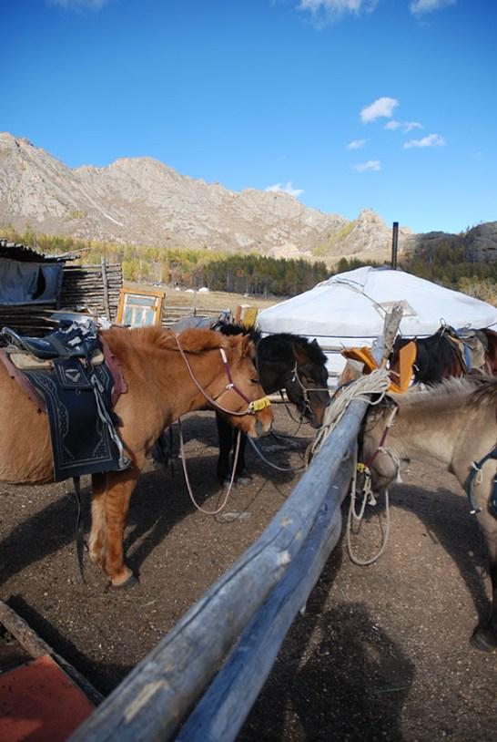 Terelj nationaal park paardrijden