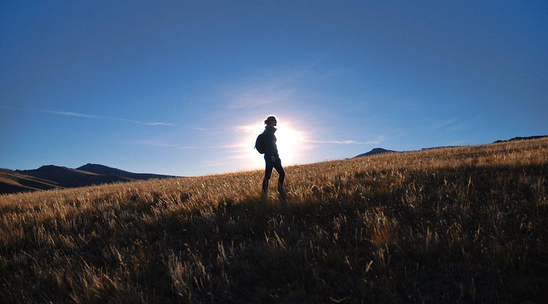Hustai nationaal park Mongolië