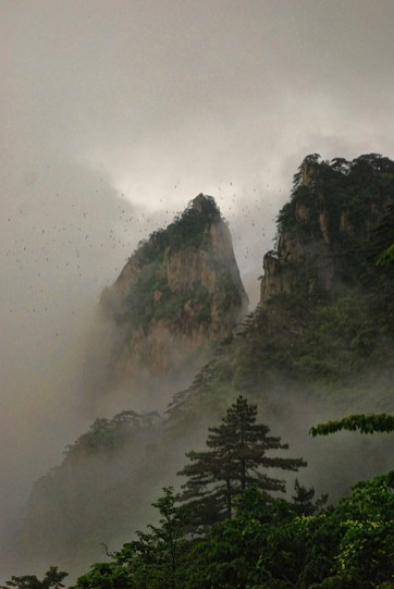 Huangshan Gele bergen avond vogels