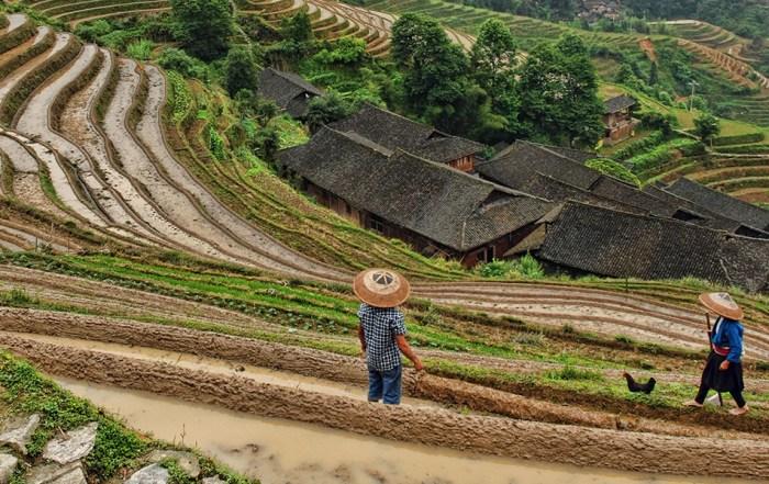 Longji rijstterrassen Dazhai China