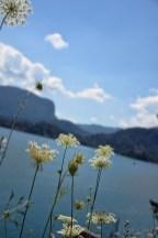 Bloemen bij het meer van Bled