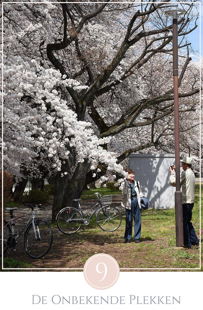 Een oudere man maakt een foto van zijn vrouw tussen de bloesem bomen in Tokyo, hun fietsen staan geparkeerd