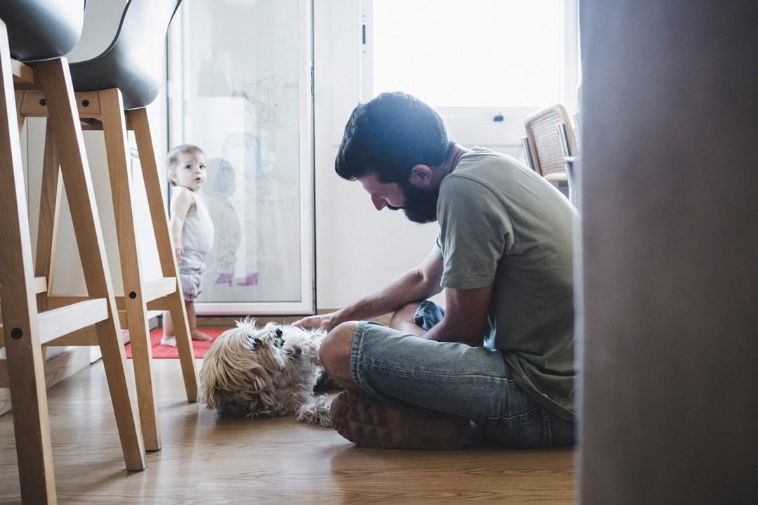 senior dog with his human
