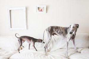Reportaje de familias con Mascotas chica y perro galgos en el sofa