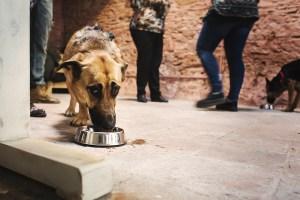 cumpleaños perruno. Perro bebiendo cerveza para perros