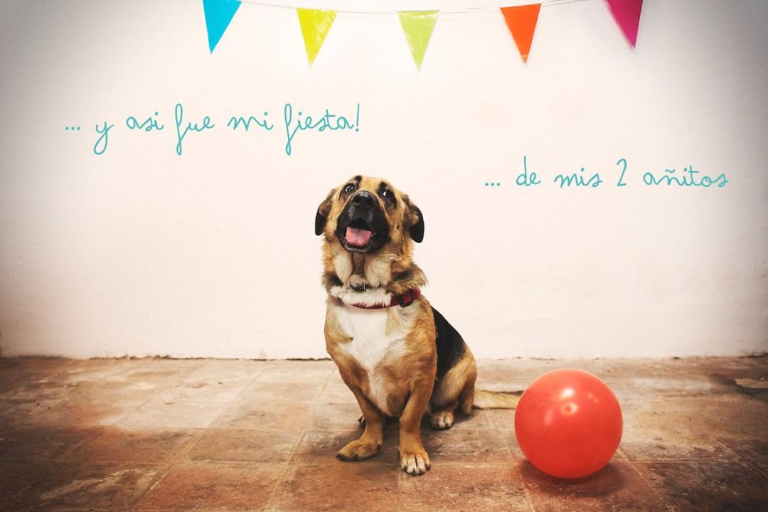 "Fotógrafo de mascotas ""Cumpleaños perruno de Luka"""