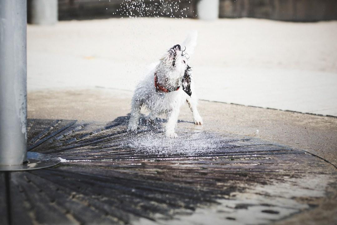023a_fotografia-mascotas_els-magnifics_perro-jackrussell