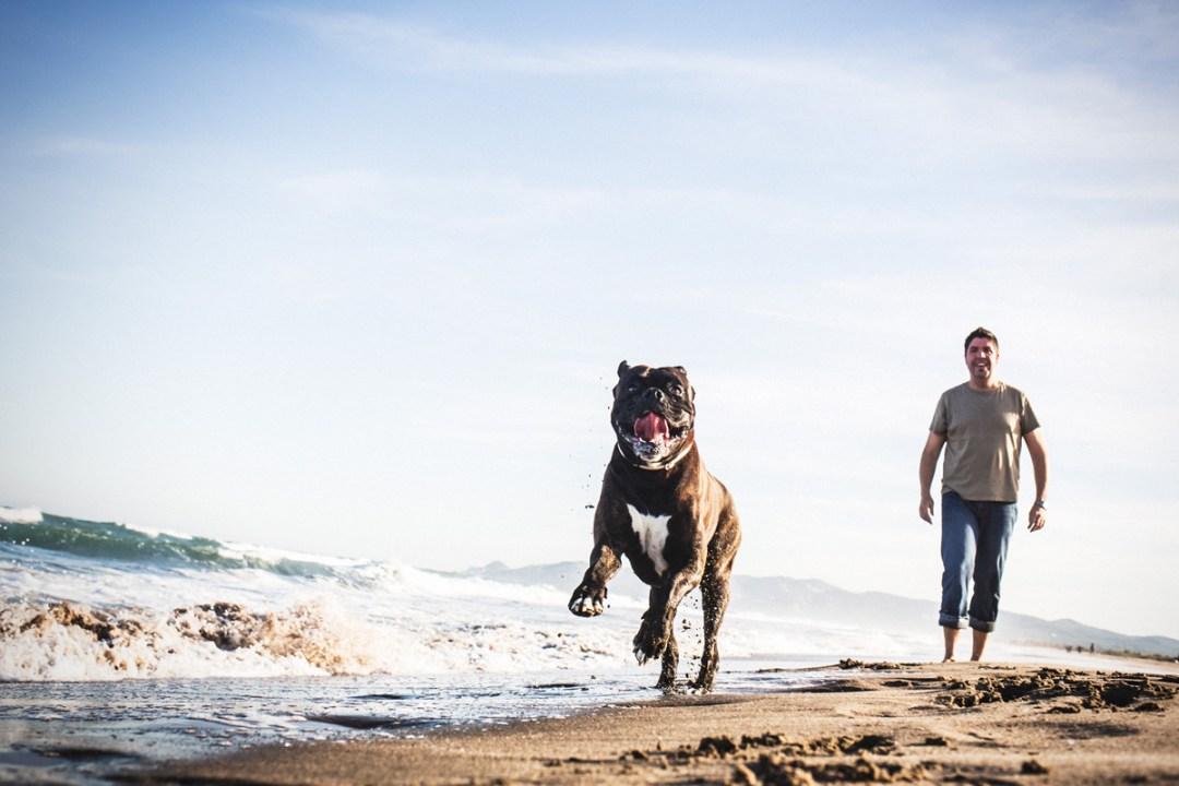002_fotografia-mascotas_els-magnifics_perro-boxer-playa-platera