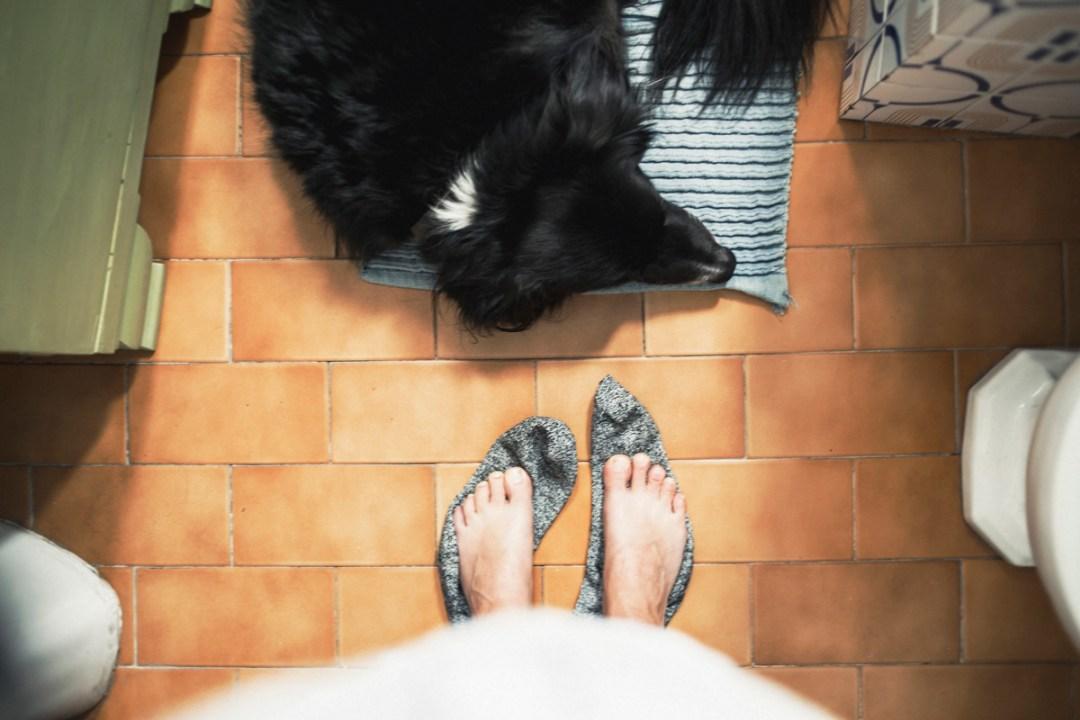 008_fotografia-mascotas_els-magnifics_vulcano-olot-trico