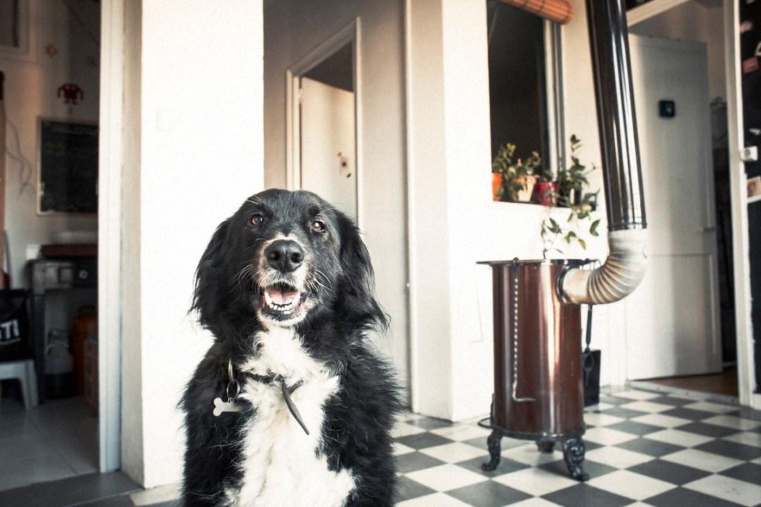 013_fotografia-mascotas_els-magnifics_vulcano-olot-trico