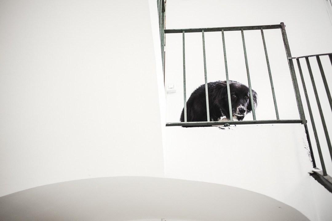 037_fotografia-mascotas_els-magnifics_vulcano-olot-trico
