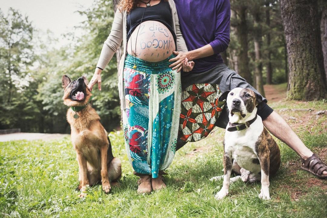 pastor aleman y american standfort con pareja embarazada