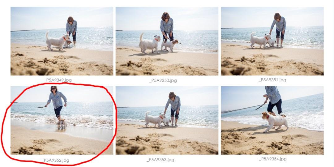 reportaje de mascotas jack russell en la playa