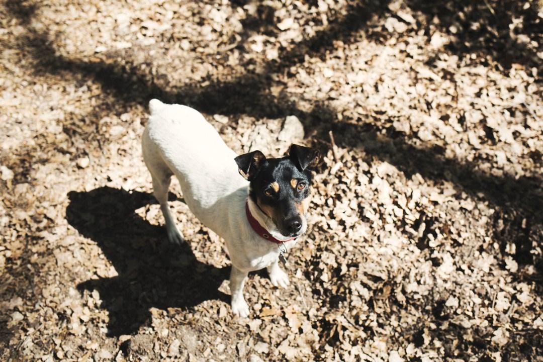 016_reportaje de mascotas_elsmagnifics_Estany Banyoles