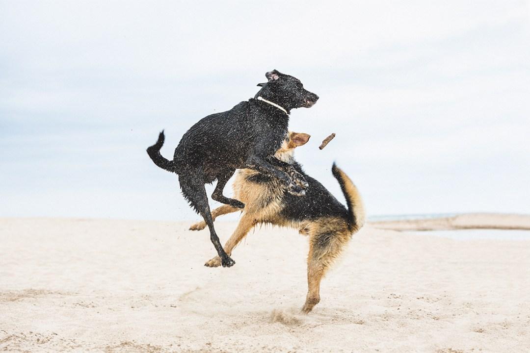 fotografo de mascotas 009_elsmagnifics-OdieDex