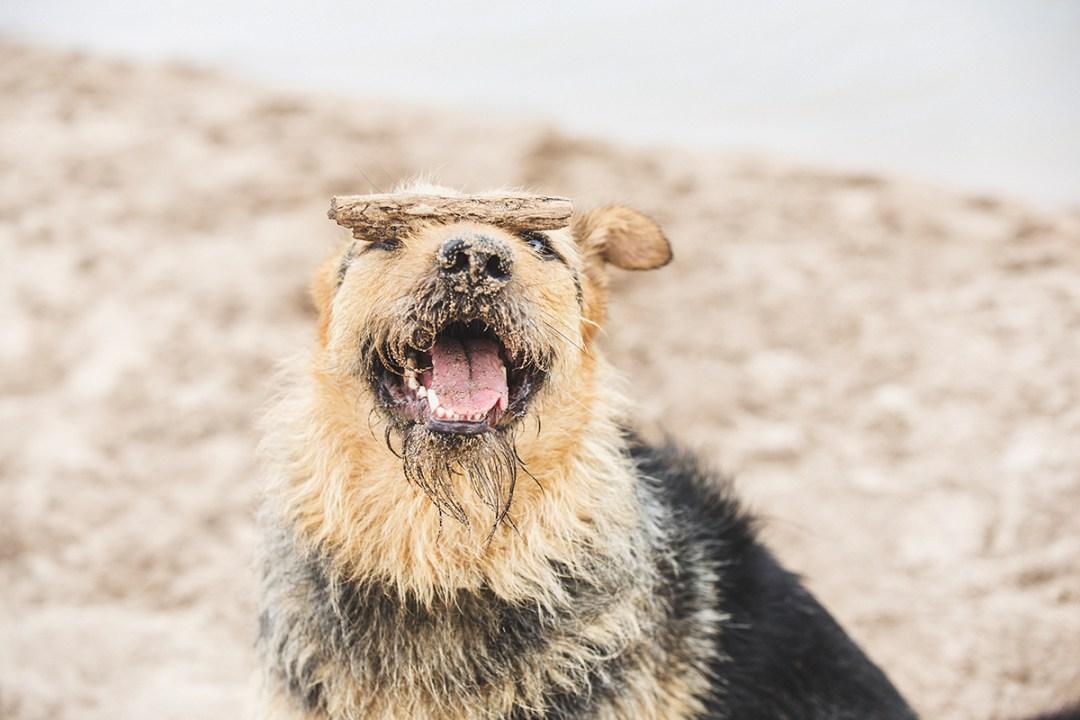fotografo de mascotas 011_elsmagnifics-OdieDex
