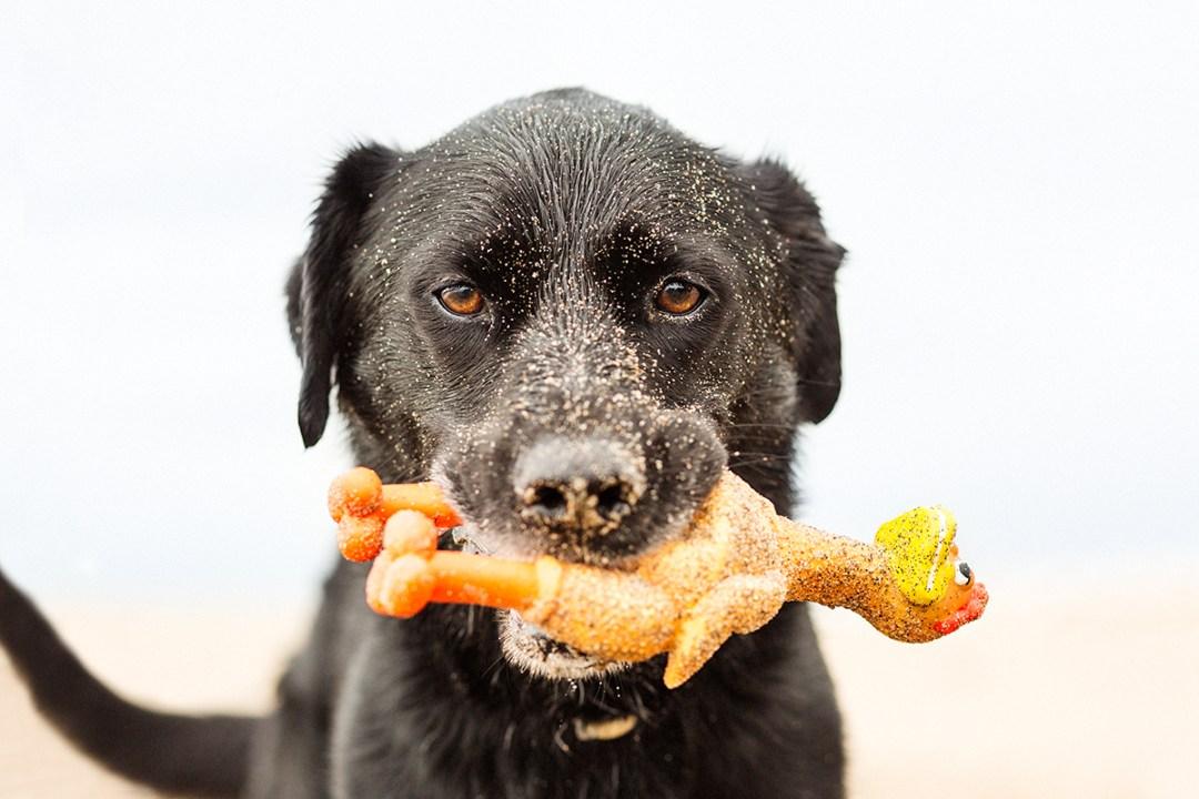 fotografo de mascotas 046_elsmagnifics-OdieDex