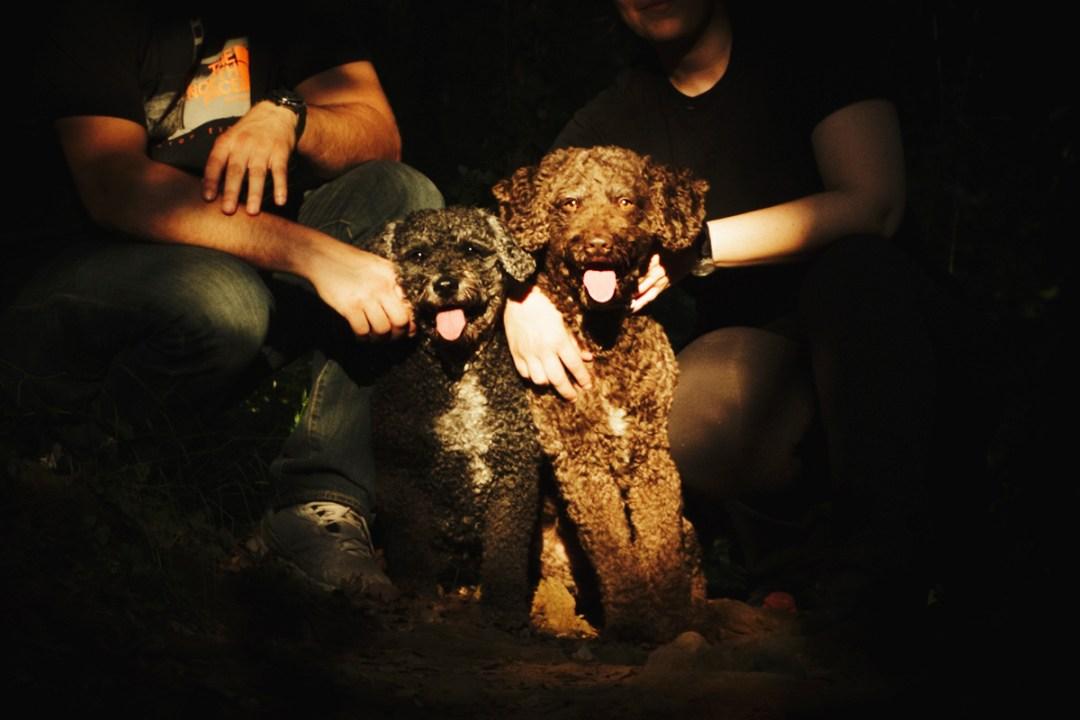 retrato perros de aguas en la Fageda d en Jorda