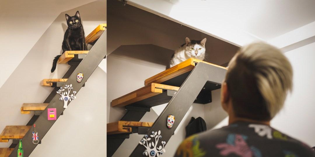 fotografo-de-mascotas-001-els-magnifics_gatos-lonabrugi