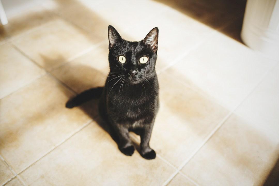 fotografo-de-mascotas-009-els-magnifics_gatos-lonabrugi