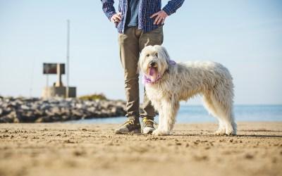 "Fotógrafo de Mascotas ""Un tándem perruno muy peculiar: Willie&Maggie"""