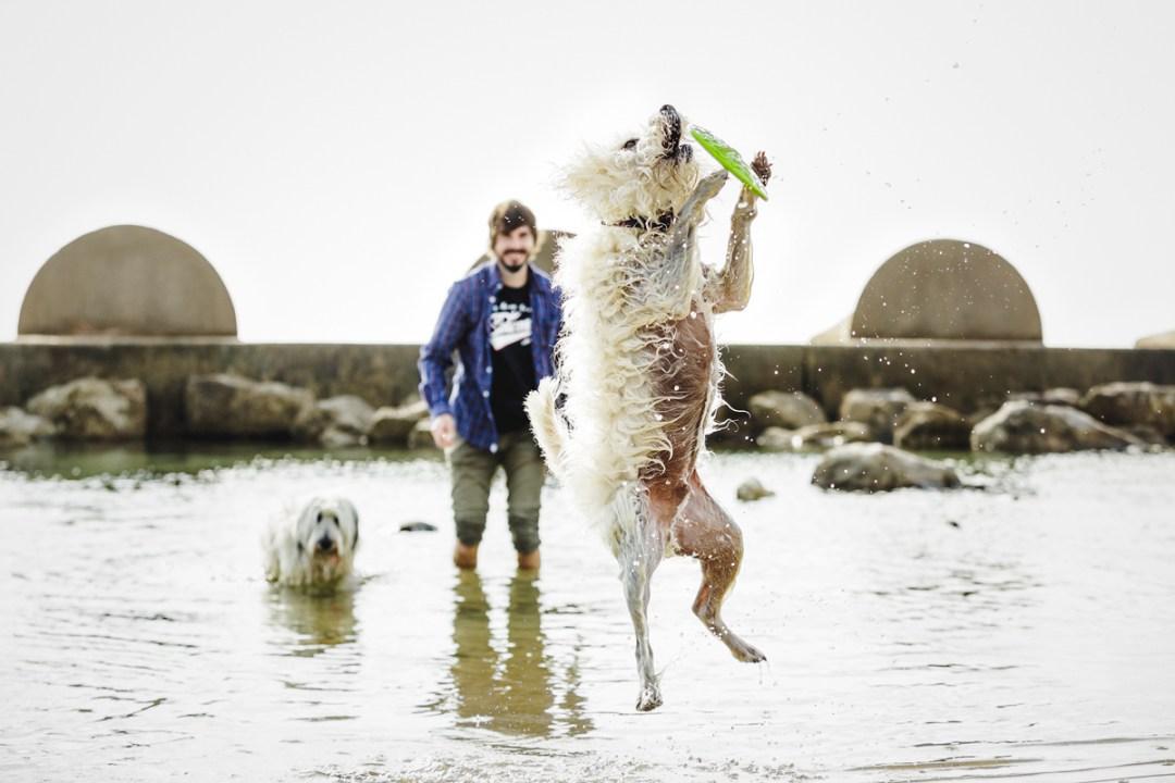 fotografo-de-mascotas-014-els-magnifics_perro-williemaggie
