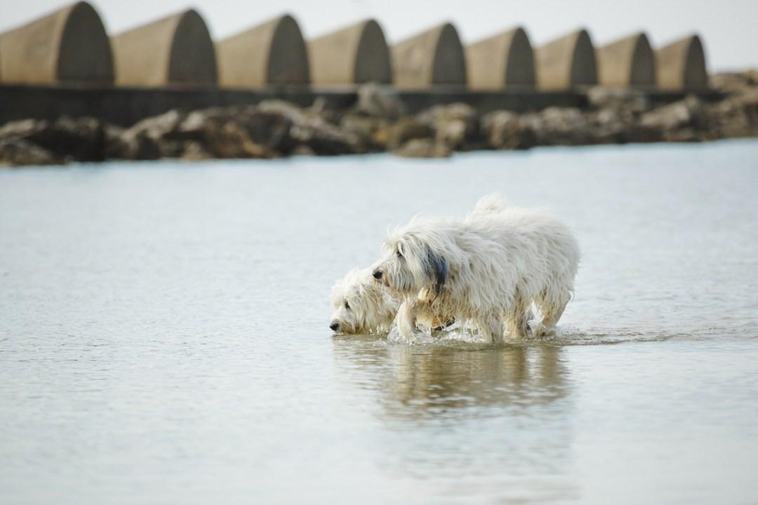 fotografo-de-mascotas-015-els-magnifics_perro-williemaggie