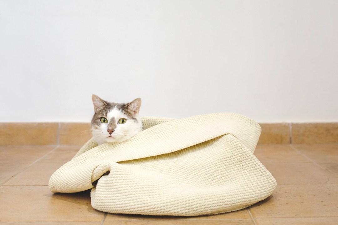 fotografo-de-mascotas-018-els-magnifics_gatos-lonabrugi