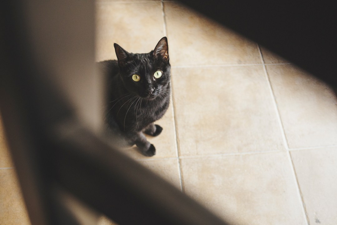 fotografo-de-mascotas-022-els-magnifics_gatos-lonabrugi