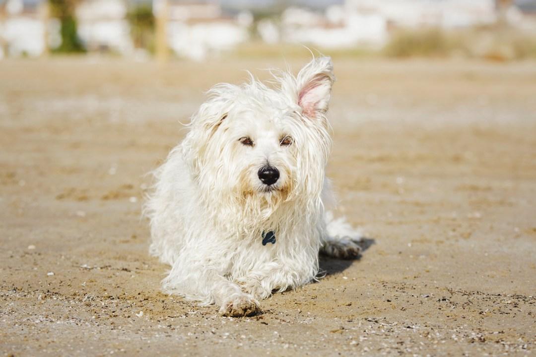 fotografo-de-mascotas-035-els-magnifics_perro-williemaggie