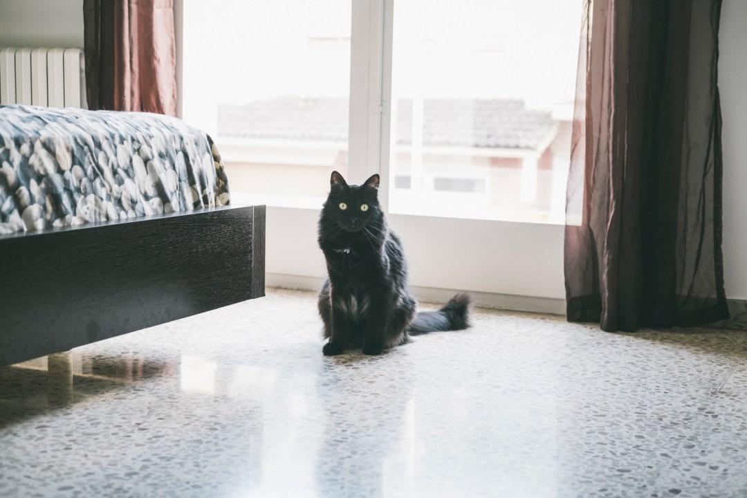 gato negro pelo largo en casa