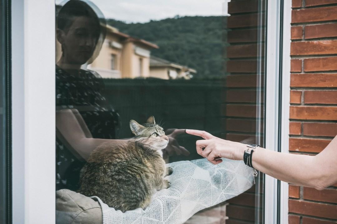 gato atigrado junto a ventana