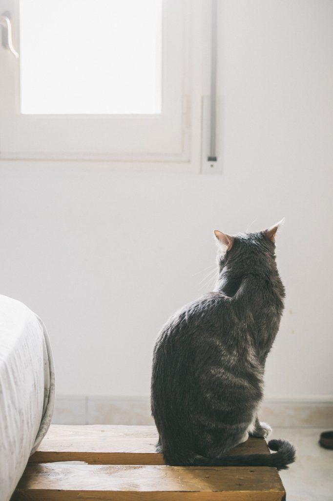 gato mira ventana