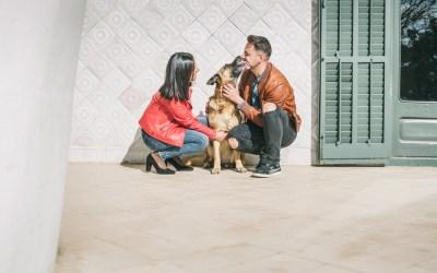 Fotógrafa de mascotas: Agora, una bellezón Pastor Alemán