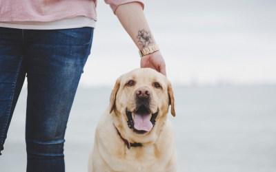 Fotógrafo de Mascotas: Truc, un labrador muy especial