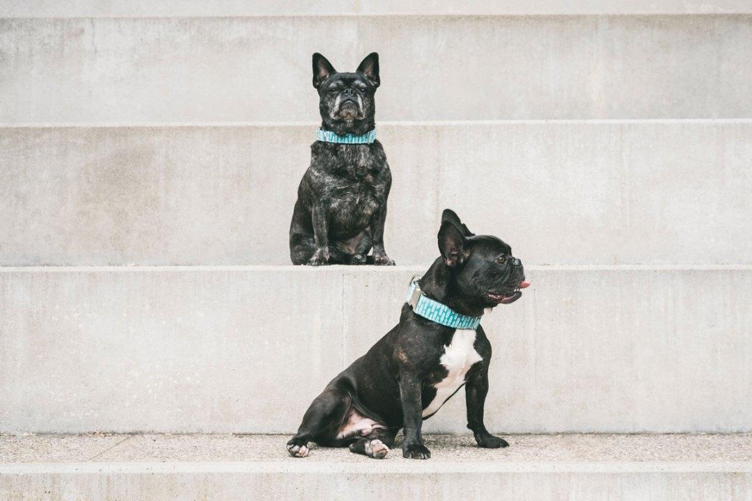 senior bulldogs