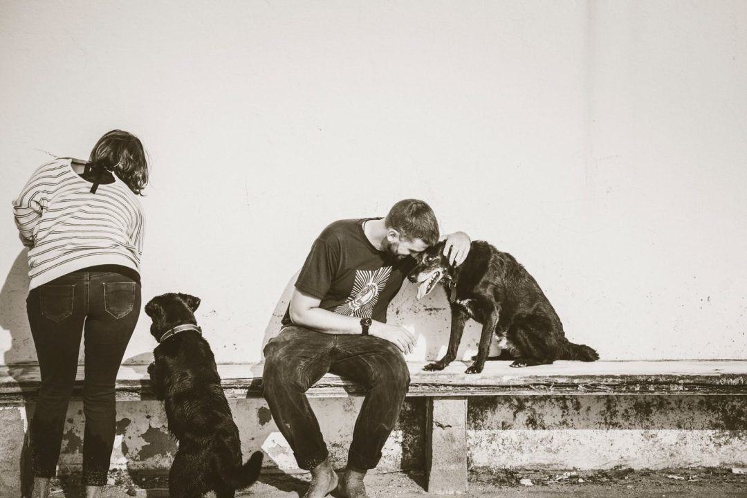 perro viejito y su humano