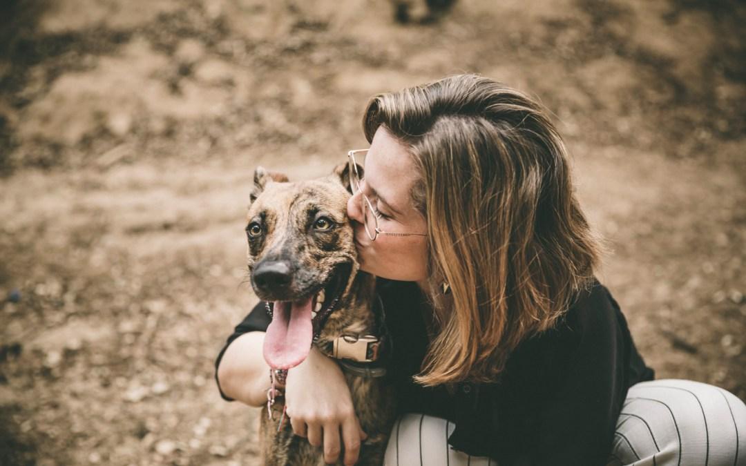 Protegido: Fotógrafo de mascotas: Una tarde con Vermut