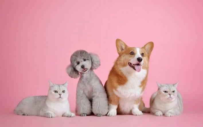 Perrhijos protegidos! Lanzan seguro digital para mascotas - El Sol de San Luis