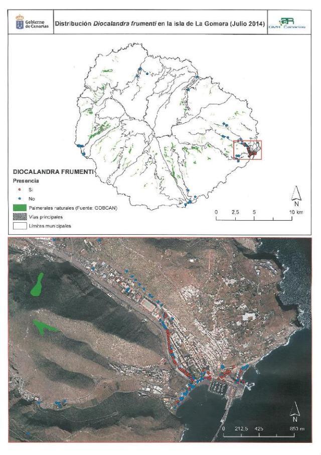 imagen en la que se puede ver el alcance de las palmeras afectadas en San Sebastián