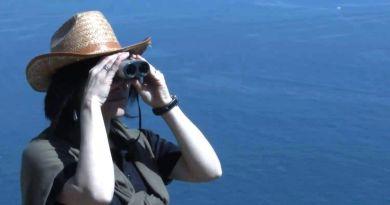 La Gomera y el avistamiento de aves