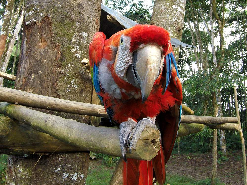 La diversidad de especies que tiene el Putumayo es otro atractivo para el turista. En lugares como la reserva Paway se puede interactuar con animales.
