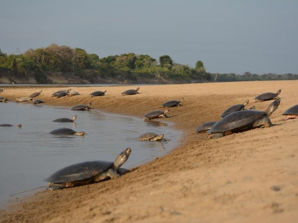 Fotos de la Fundación Omacha - Especial 'Especies'