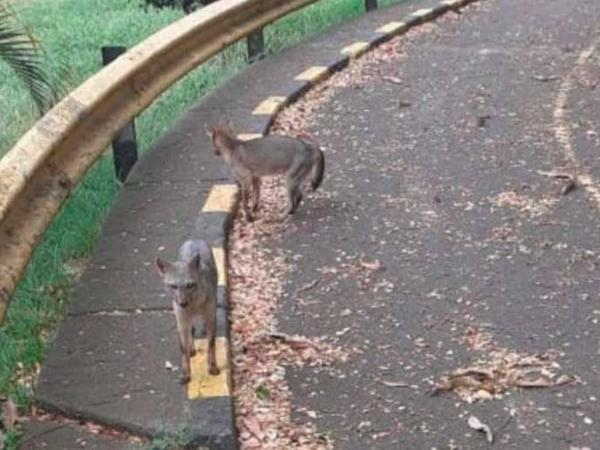 Animales en cuarentena