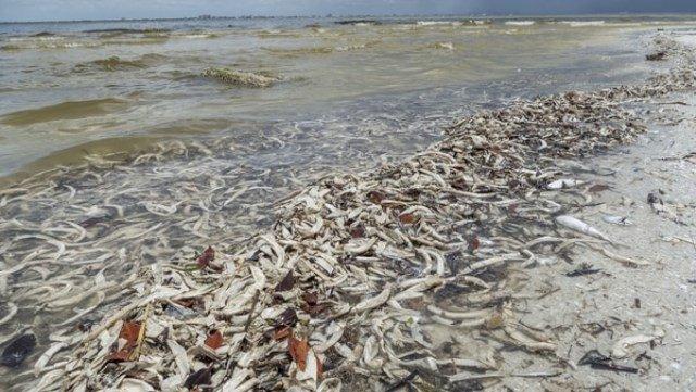 Marea roja llega a las playas de Miami Florida
